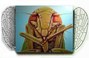 Medium grasshopper 30x36
