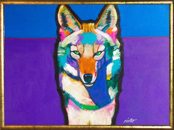Large trickster coyote framed