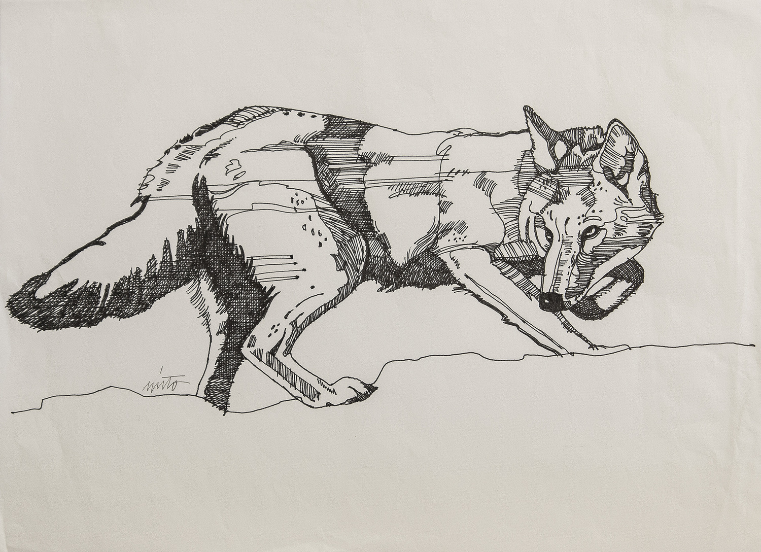 Xlarge coyote ink