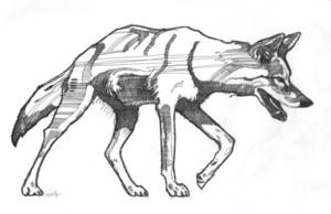 Medium coyote 1 ink