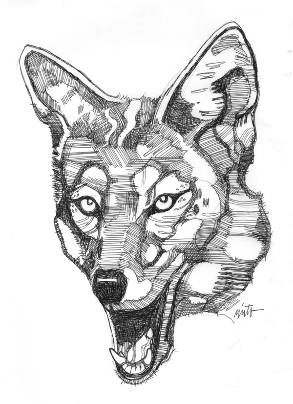 Large coyote 2 ink