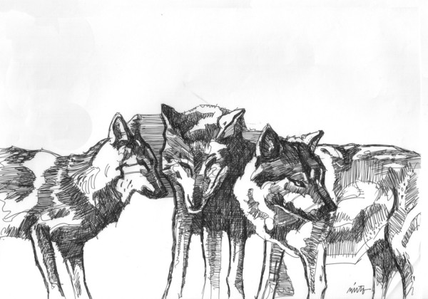 Large wolf pack ink
