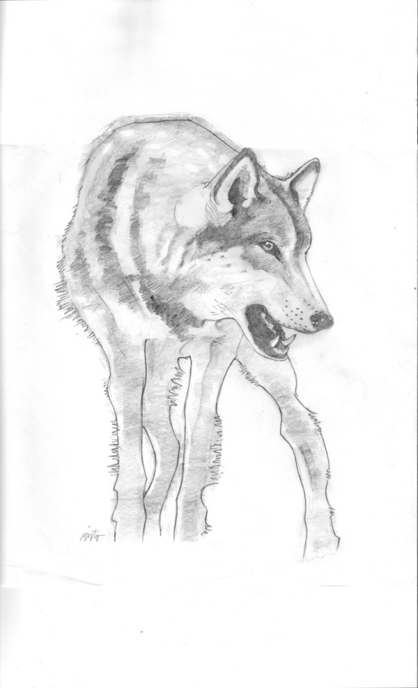 Large wolf pencil